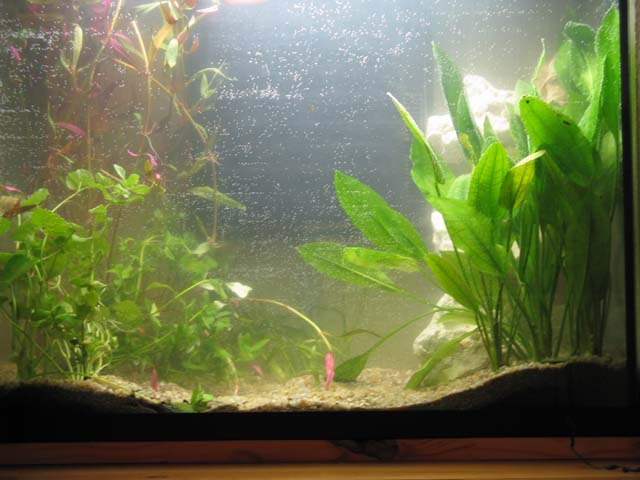 Aquarium de pruno poissons exotiques for Aquarium en solde